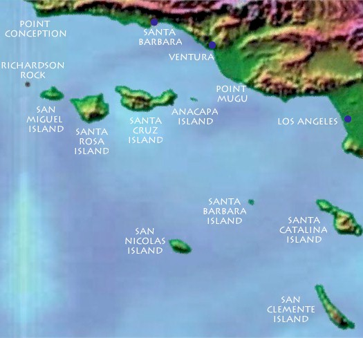 Costa Cetacea