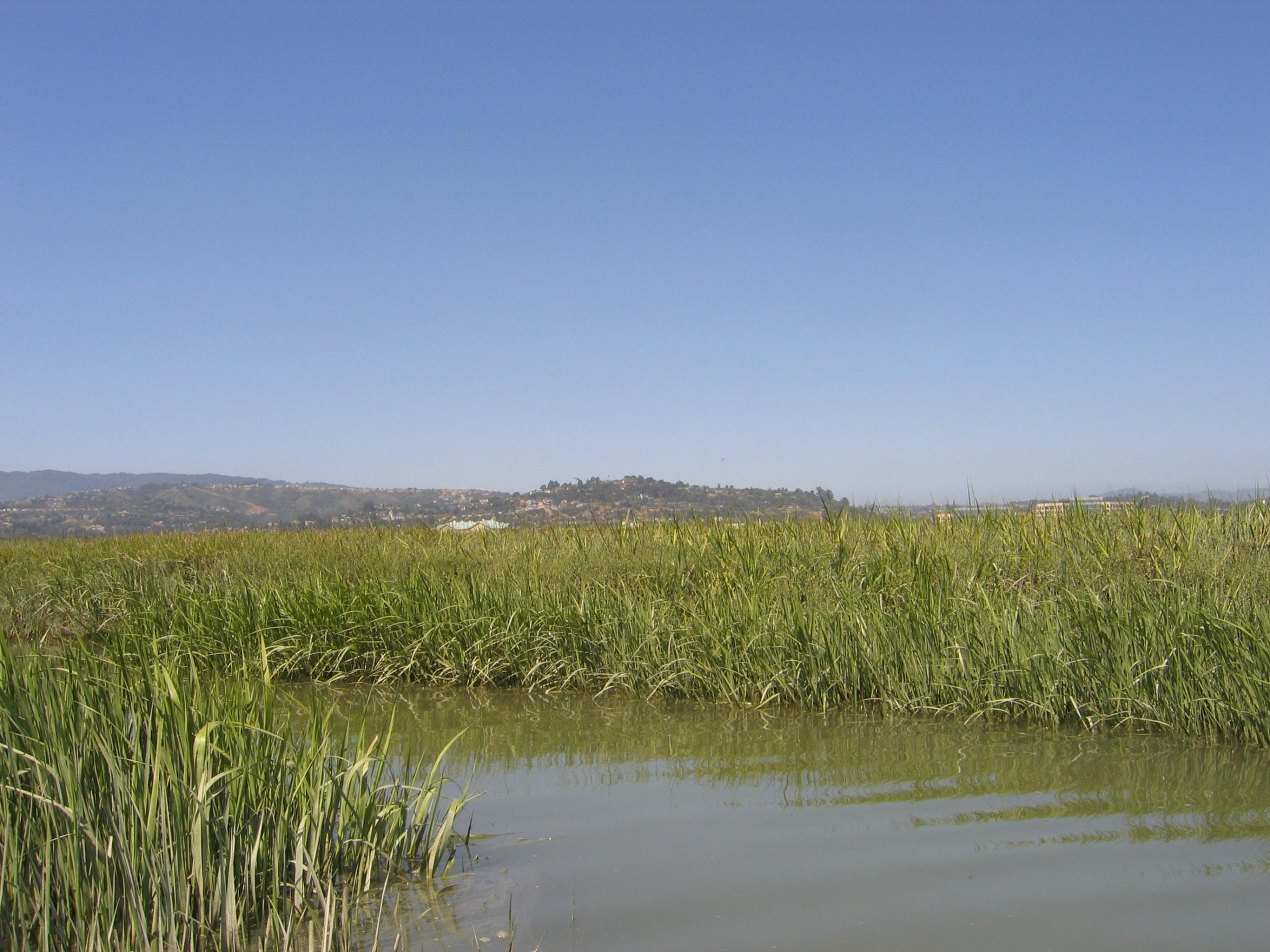 South Bay Sloughs